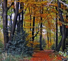 November colors by Hepiefull