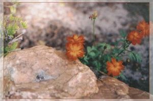Rock and Flower by WiccanWT