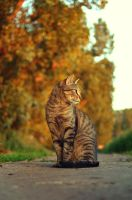 cat portrait by sys66