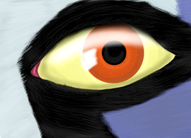 Rook eye practice by sammydavie