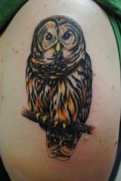 Owl by truth-is-absolution