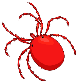 Water mite  Clipart by MisterBug
