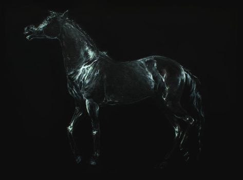 Black Mare by howlinghorse