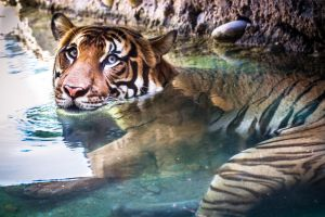 Just one quick dip by 904PhotoPhactory