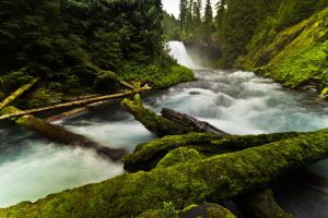Mckenzie River by mofig