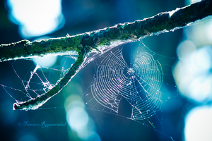 Spider Art by TammyPhotography