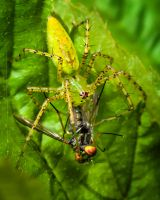 Food For Spider by drhine