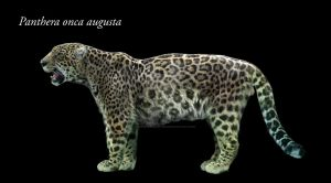 Panthera onca augusta by Dantheman9758