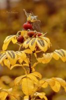 Autumnal detail. by Phototubby