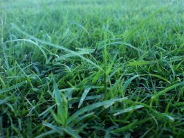 green grass by rjoshicool