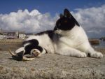 Cats on Ille de Sein 1 by marmota-b