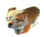 Border Collie with Glasses by ammy-o