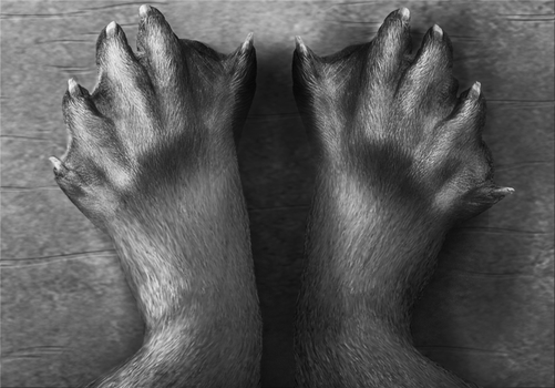 Otter feet transformation by Lutra75