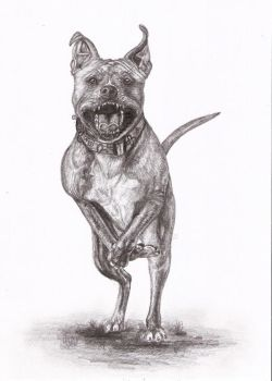Staffordshire terrier by IviiK