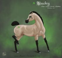 Lucky - colt reference by Aomori