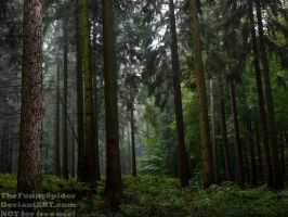 October Forest - Germany 2016 by TheFunnySpider