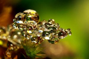 Cluster Of Jewel by josgoh