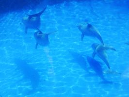 Dolphins by GadeChii
