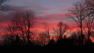 Where the Sun Meets the Tree by TheMarchStudios