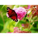 Butterfly I Love You by noemia
