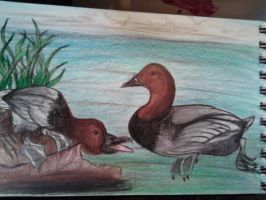 Canvas backed ducks. by Chynna97