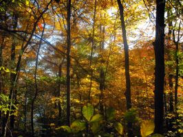 Fall Fantasy X by Mistshadow2k4