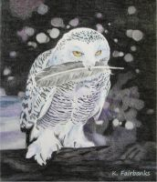 Snow Owl (pencil drawing) by eyeqandy