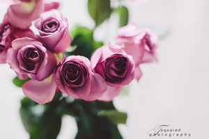 Roses by mrxthanh