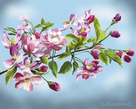 Apple Blossoms by AnnaZLove