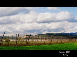 Field of hops by niwaj