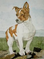 Jack Russell Terrier by Anisiriusmagus