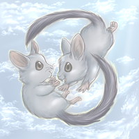 Chinchilla Sisters Reunite by Nestly