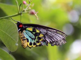 Colourful Butterfly by Souzay