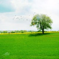 .: alone tree :. by all17