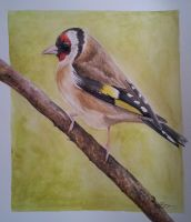 Goldfinch watercolour by BecciES