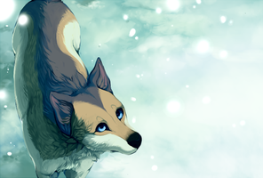 but winter doesnt even exist in the south by TotodiIe