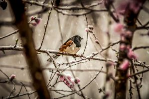 bird on snowy blooming tree by digidreamgrafix