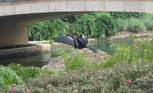 I guess they call him Anhinga by AudeS