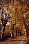 Autumn in France by TheFabulousJourney