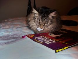 Kitty eats a strategy guide by Minicorndogs