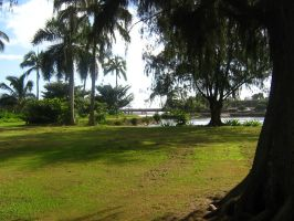 tropical river view 05 by CotyStock
