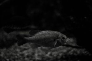 Fish 2 by er111a