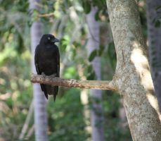Crow in Tree_Mind-Matter by Mind-Matter