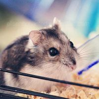 Meet my hamster II by EliseEnchanted