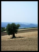 Olive Plant 01 by echomrg