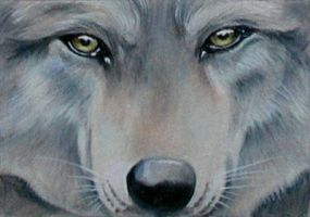 "ATC: ""Gray Wolf"" by catbones"