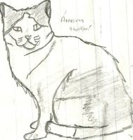 American Shorthair by CutePoochyena261