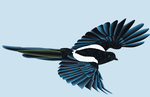 Magpie by Negau