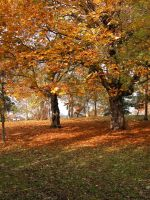 Atumnal Trees by ttwm-stock