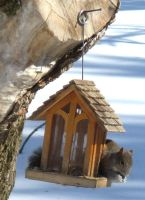 Squirrel at the feeder 2 by musicsuperspaz
